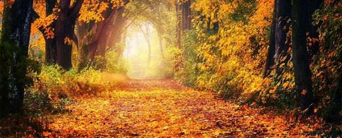 Ein Weg führt im herbstlichen Wald zum Licht.