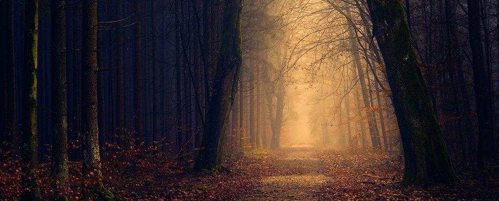 Ein Weg im herbstlichen Wald in Dunkelheit. Am Ende des Weges ist Licht zu erkennen.