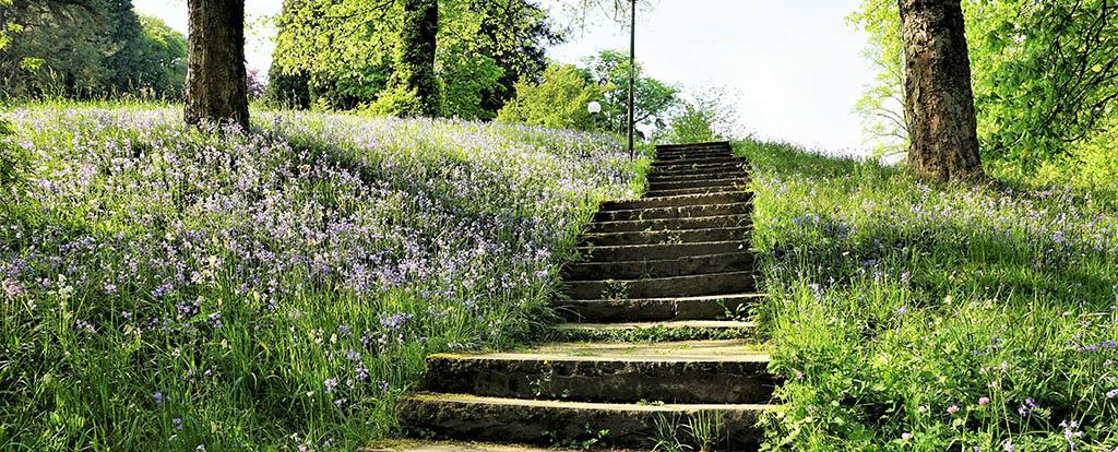Eine steinerne Treppe führt durch eine blühende Wiese nach oben. Ein Bild für einen Neuanfang.