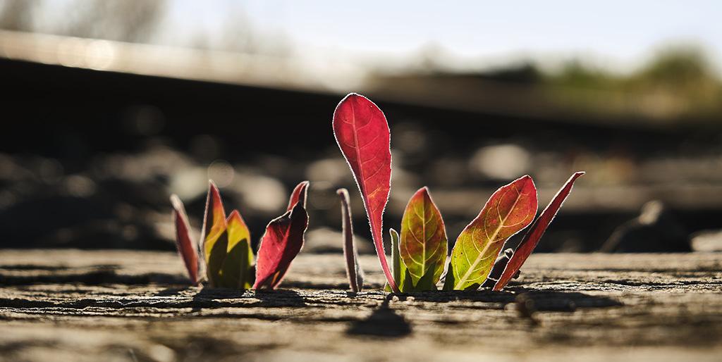 Die ersten Blätter eine Pflanze zeigen sich in der braunen Erde, ein Zeichen für einen Anfang.