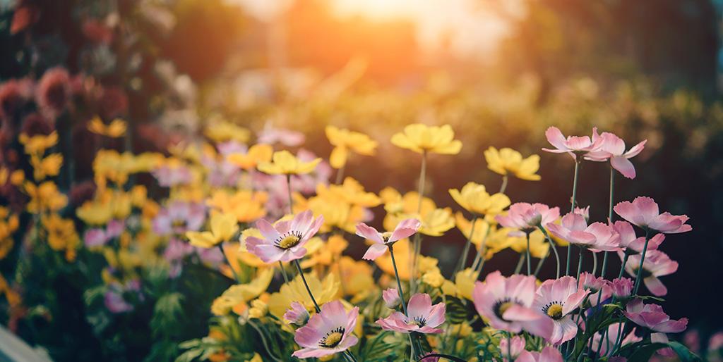 Eine Blumenwiese in der Abendsonne steht für Fülle und Erfüllung.