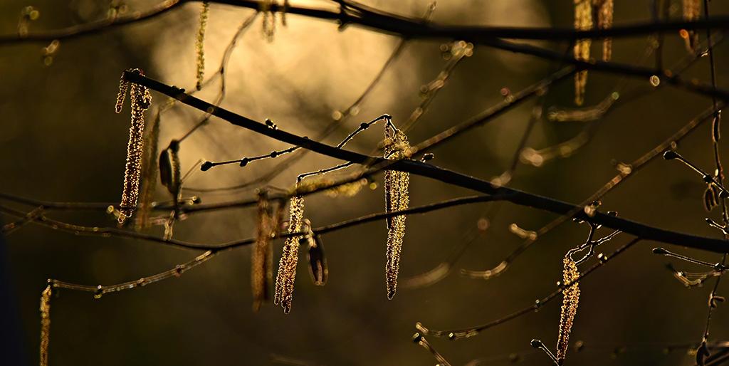Zweige eines Baumes sind im Gegenlicht zu sehen.