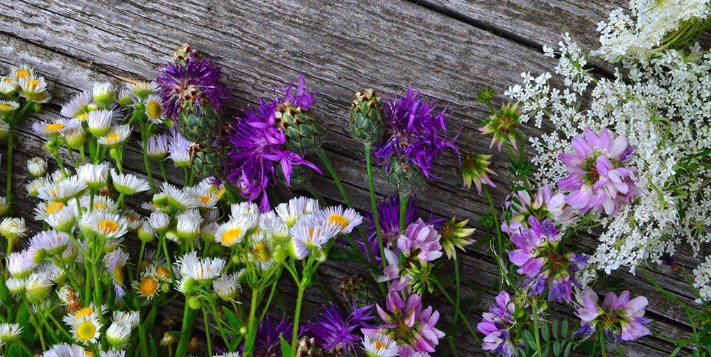 Ein Garten mit blühenden Blumen kennt kein Ankommen, er verändert sich stets und wächst.