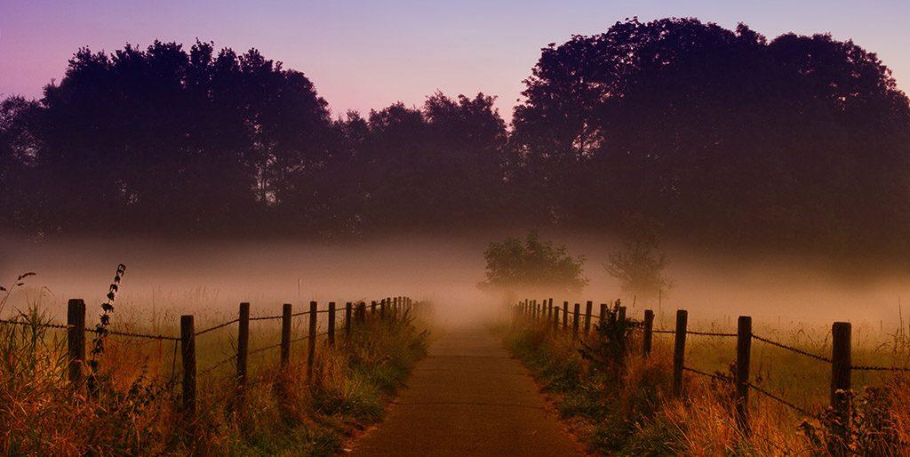Ein Weg zwischen Feldern im Morgennebel als Bild dafür, dass jeder Mensch seinen eigenen Weg hat.