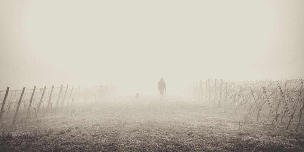 Ein Mann geht im dichten Nebel durch einen Weinberg, der Nebel ist ein Symbol für die Hilflosigkeit.