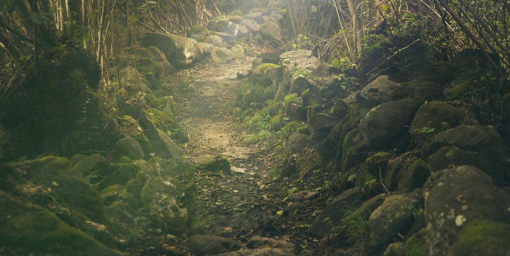 Ein Pfad mit Steinen schlängelt sich durch den Wald - ein schwerer Weg.