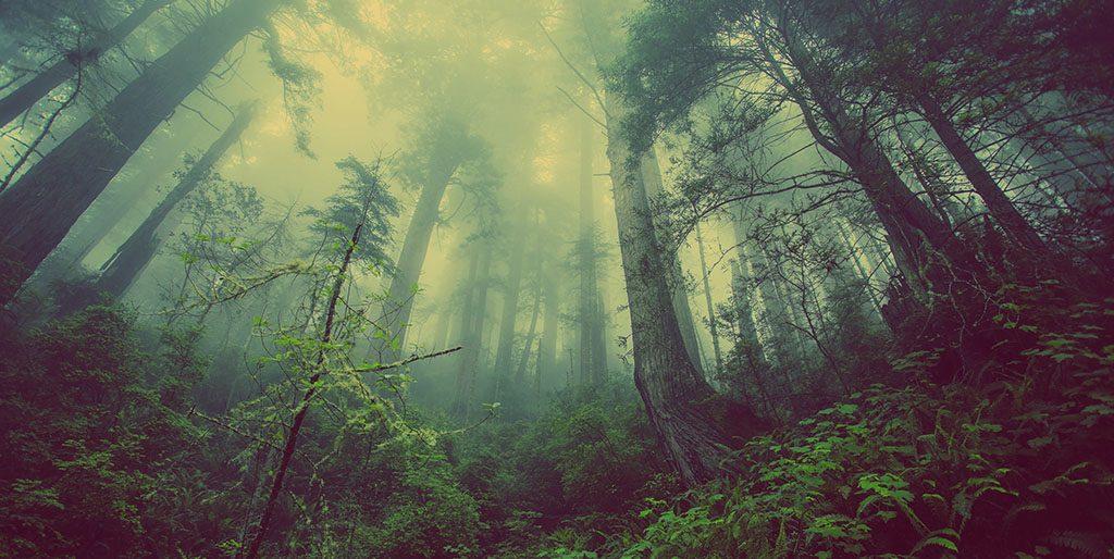 Ein Wald im Nebel - als Bild dafür wie ich selber sicherstelle unzufrieden zu sein.