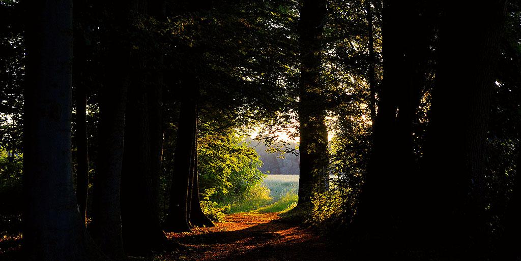 Ein Weg im dunklen Wald öffnet sich zur Sonne. Ein Symbolbild für Trauer und Freude.