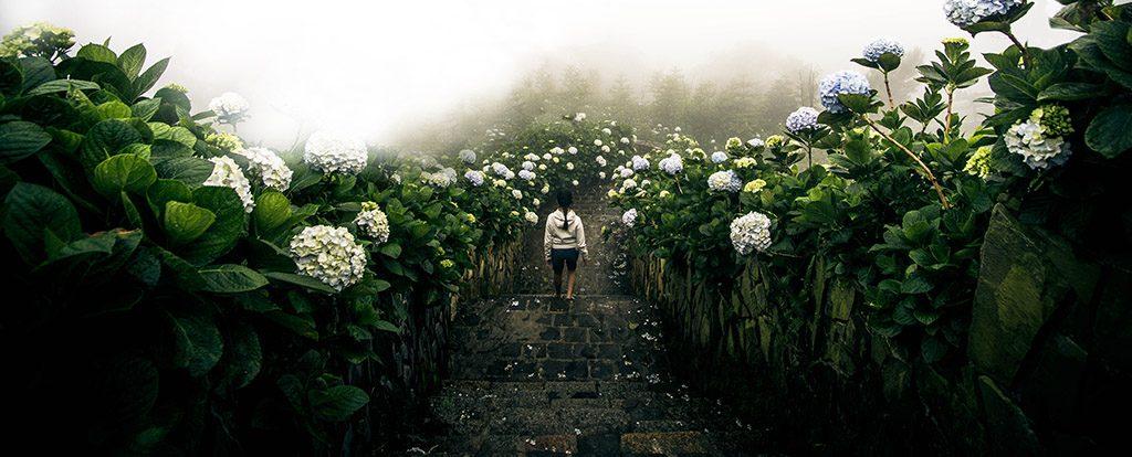 Eine junge Frau geht eine Steintreppe hinunter, die von beiden Seiten von blühenden Hortensien eingerahmt ist.