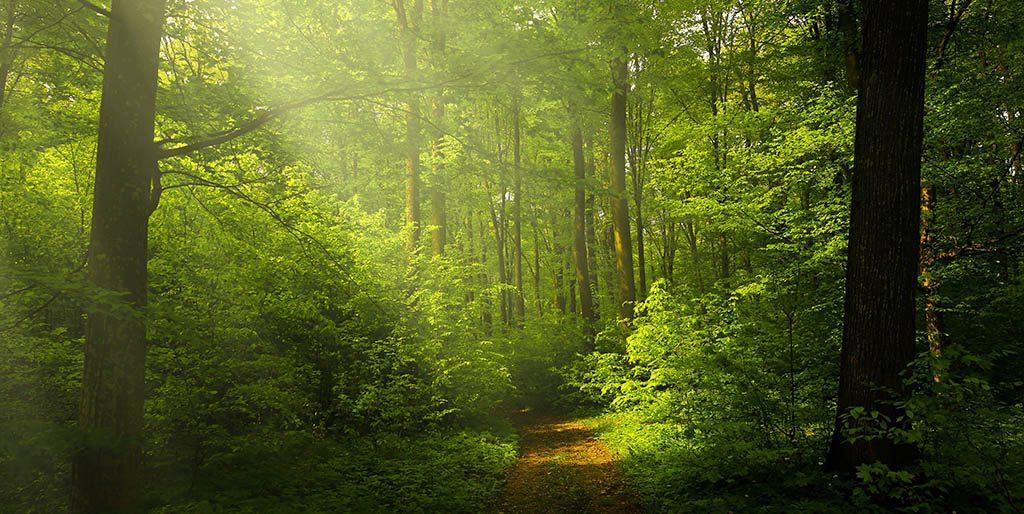 Sonnenstrahlen fallen durch die Bäume im Wald, der perfekte Ort zur innere Ruhe zu finden.