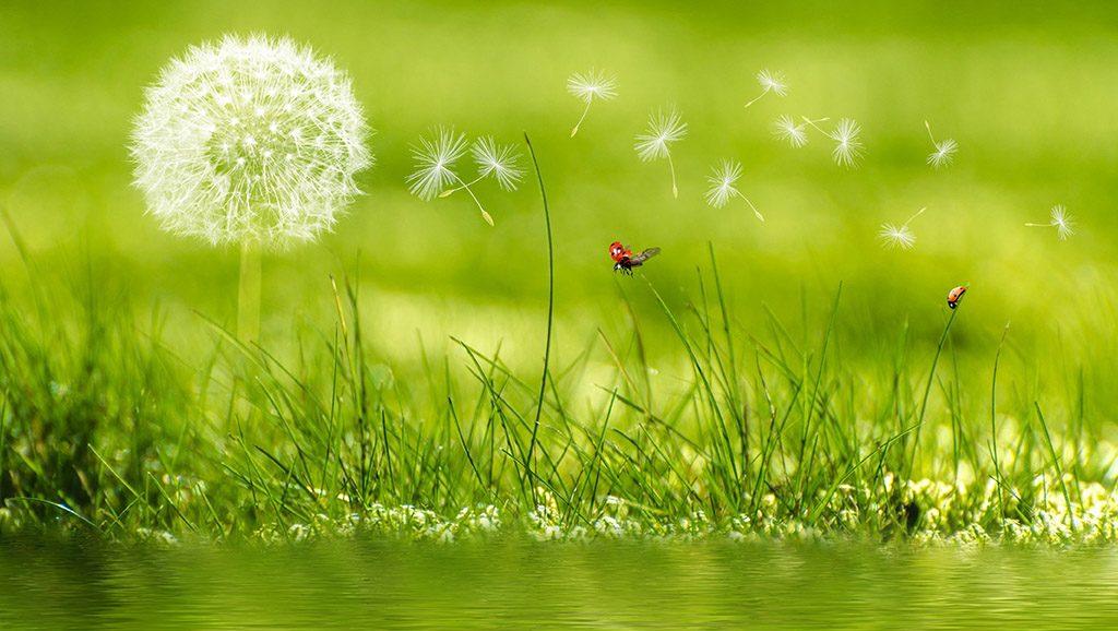 Eine Pusteblume ist auf einer grünen Wiese zu sehen und steht als Symbol für die Leichtigkeit, die wir uns oft wünschen.