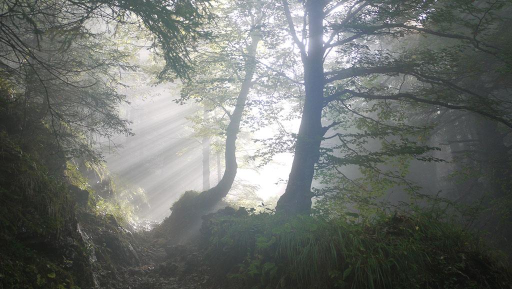 Das Sonnenlicht am Morgen scheint durch die ersten Blätter der Bäume im Wald wie das Licht der Hoffnung.