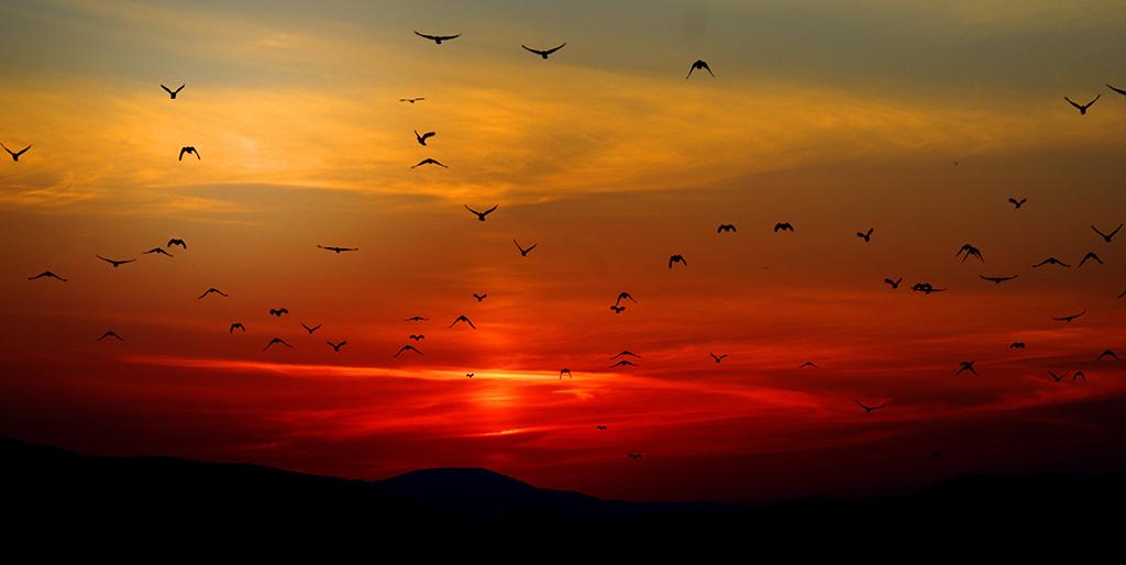 Vögel fliegen in einen frühen Sonnenaufgang - der Anfang des Tages.
