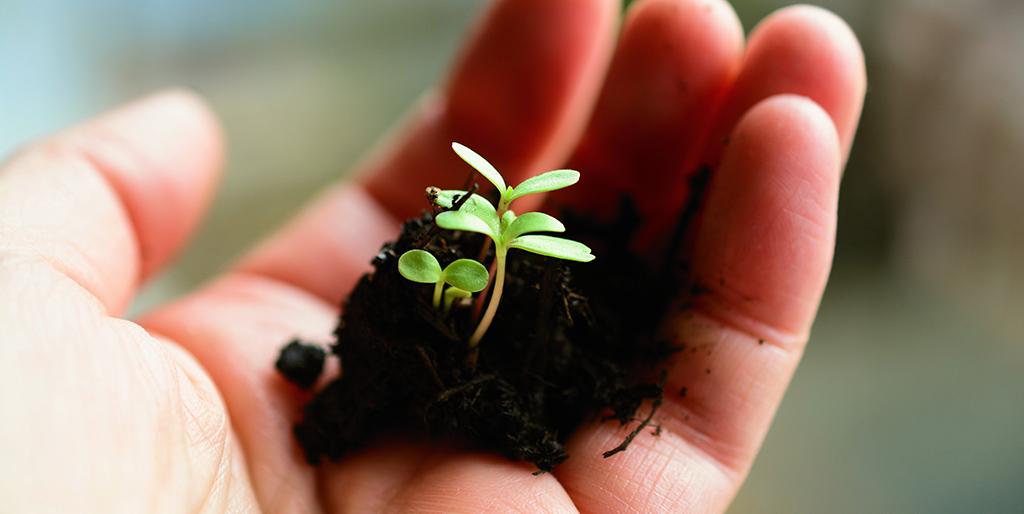 In einer Hand ist etwas Erde mit drei kleinen Pflanzenkeimlingen. Nur was wir säen können wir ernten.