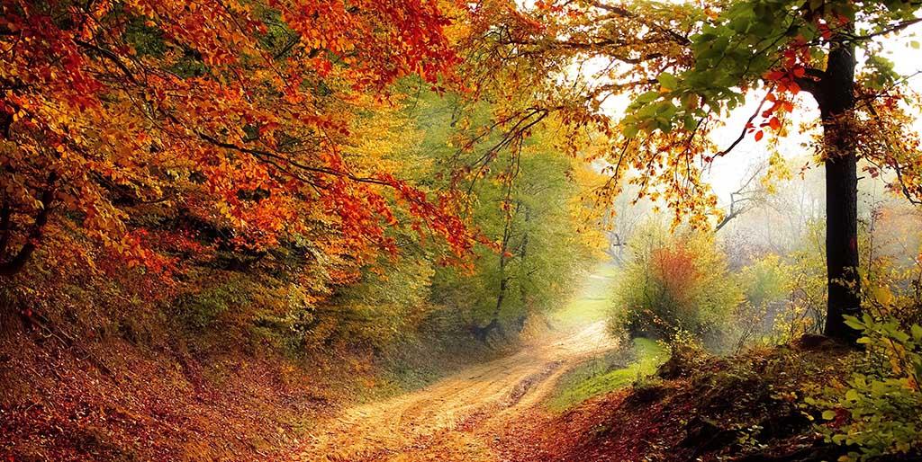 Ein Weg ist gesäumt von Bäumen mit herbstlich gefärbten Blättern.