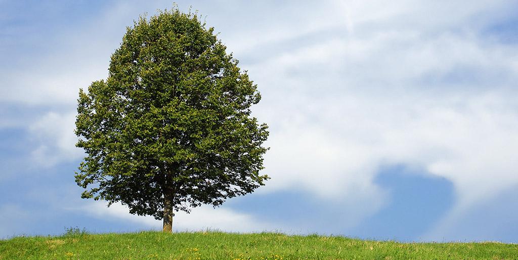 Ein Baum steht auf einer grünen Wiese, gewachsen aus einem kleinen Samenkorn.