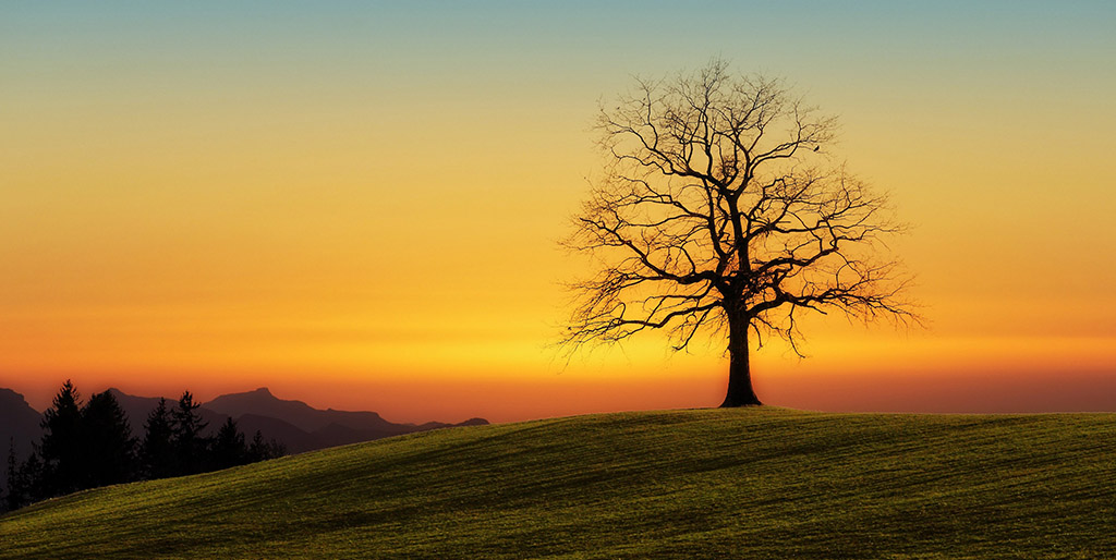 Vor einem orange-gelben Sonnenuntergangshimmel steht ein Baum ohne Blätter auf einem Hügel.